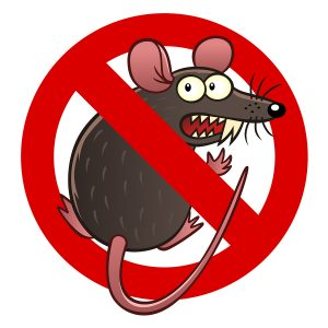 Rodent Insurance for car Edmonds, WA