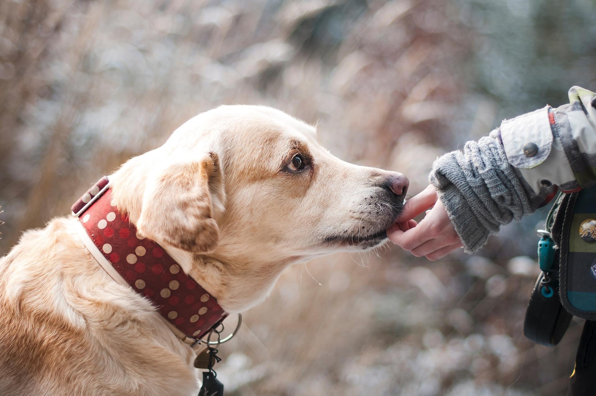 Liability Insurance for Dog Bite Claims Edmonds, WA